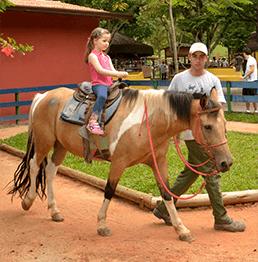 animais_cia_dos_bichos_cavalos
