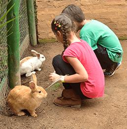 animais_cia_dos_bichos_coelhos
