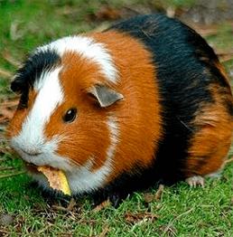 animais_cia_dos_bichos_india
