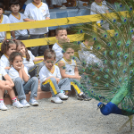 escolas_cia_dos_bichos_foto6