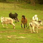 nos_animais_cia_dos_bichos_fotos1