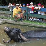 nos_animais_cia_dos_bichos_fotos2