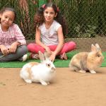 nos_animais_cia_dos_bichos_fotos8